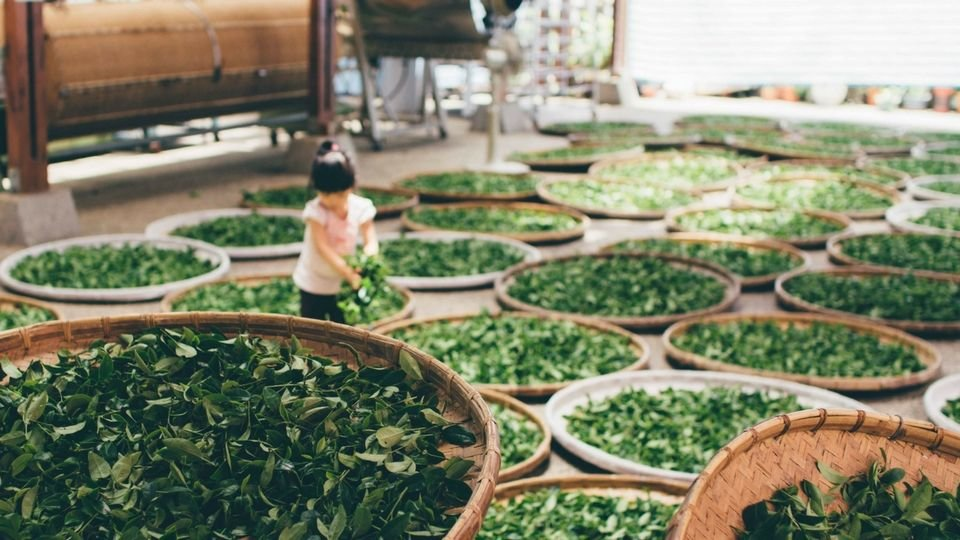 /images/r/chinese-girl-sorting-tea-from-unsplash-compressor/c960x540/chinese-girl-sorting-tea-from-unsplash-compressor.jpg