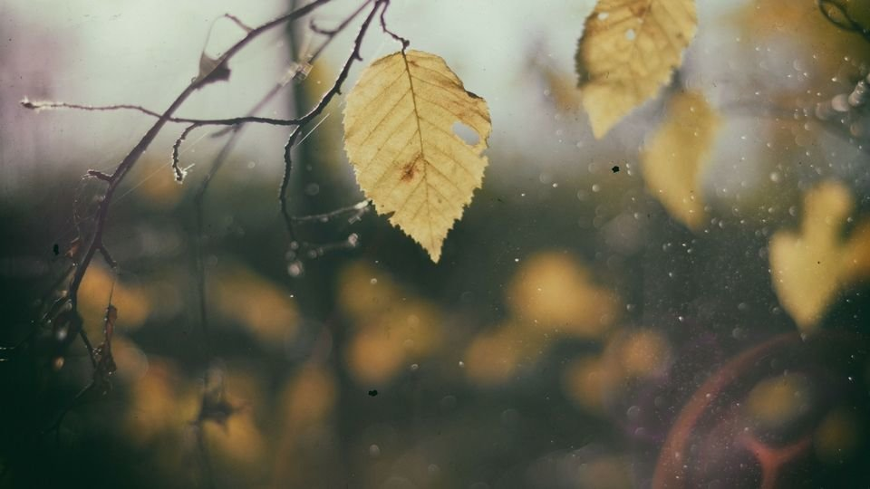 leaf image from unsplash compressor