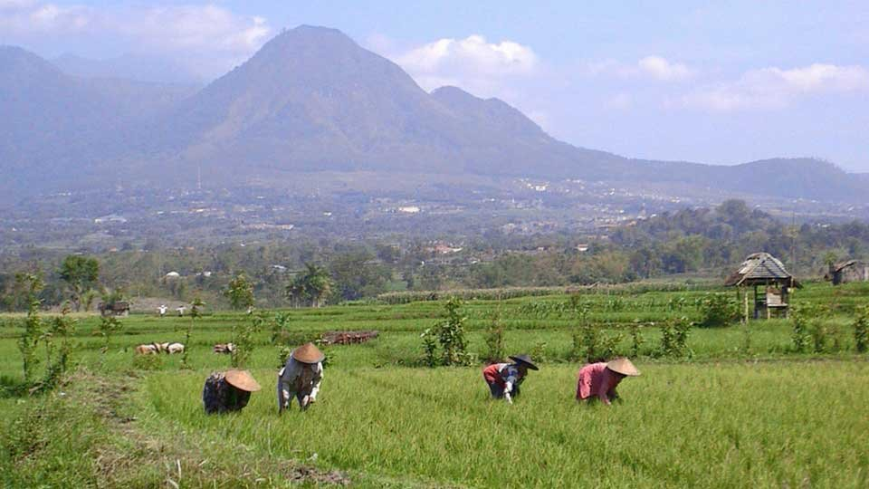 /images/r/philippines-women-working-in-rice-paddy-for-web/c960x540g0-0-960-540/philippines-women-working-in-rice-paddy-for-web.jpg